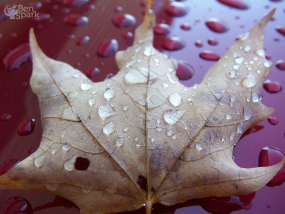 Fall Foliage Tour