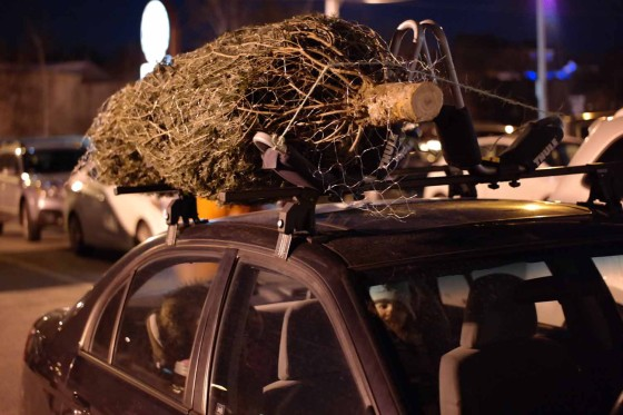 Transporting the Tree