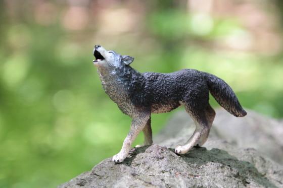 Safari Ltd. Grey Wolf