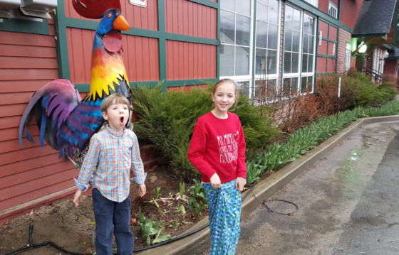 Our little geese with a rooster